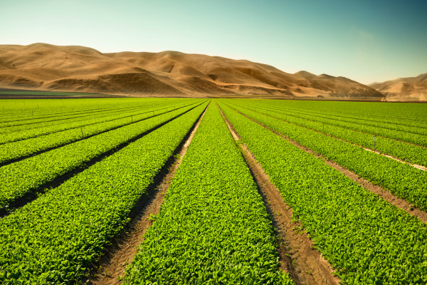 AcreTrader raises $5M to help people invest in a fruitful asset class: farmland – TechCrunch